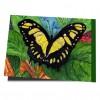 Schmetterling, Du kleines Ding...